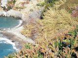 Alanyada Denize Sıfır Satılık Tarla